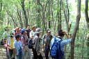 Figure 6-3: South outer rim old growth forest geotour (Minamiaso Village)